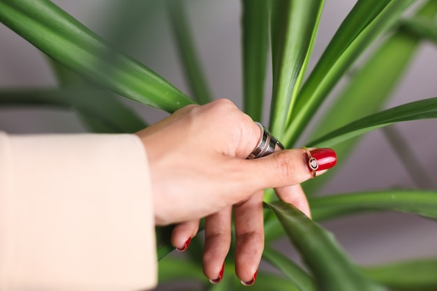 Mão de uma mulher com manicure vermelha e dois anéis nos dedos, na folha de palmeira verde linda tropical. parede cinza atrás.