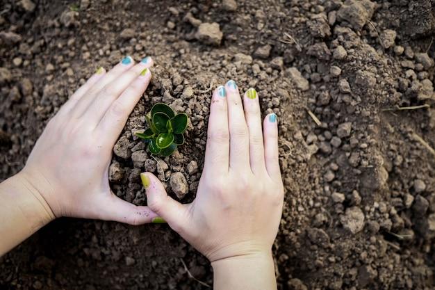 Mão de uma mulher de close-up plantando mudas com as duas mãos, plantando árvores, plantando árvores para reduzir o aquecimento global, idéias de plantio de árvores. aquecimento global.