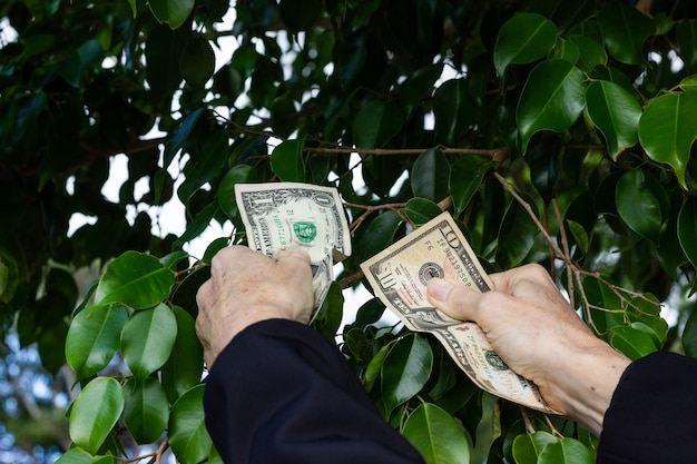 Mão de uma mulher pegando notas de dólar americano de folhas verdes do arbusto dinheiro crescendo no conceito de árvores