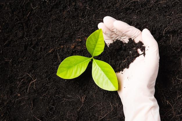 Mão de uma mulher pesquisadora usa luvas, as mudas são uma árvore verde que cresce plantada em solo preto