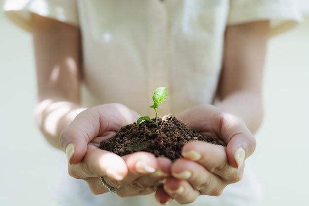 Mão de uma mulher segurando a planta do broto, planta de muda no solo. salvando terra e plantando árvores