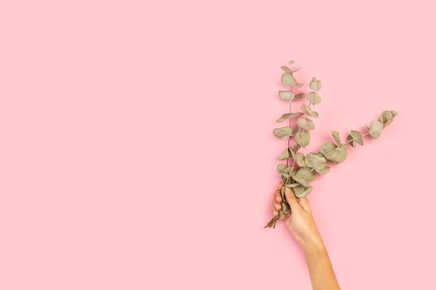 Mão de uma mulher segurando galhos com folhas de eucalipto em um fundo rosa