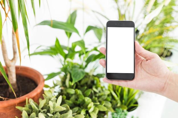 Mão de uma mulher segurando o telefone móvel perto de vasos de plantas