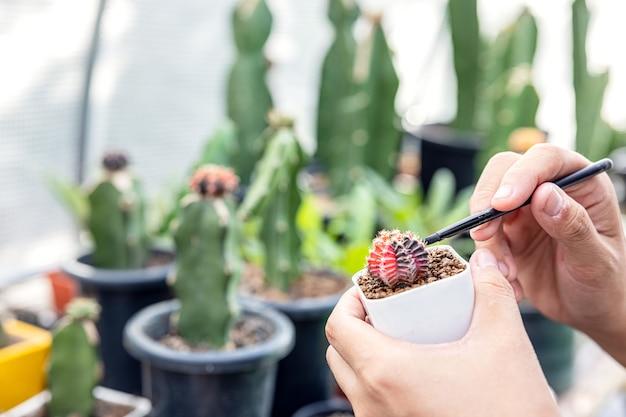 Mão de uma mulher segurando um pote de cacto. close de uma jardineira transplantando suculentas para um vaso de vidro para criar um florário botânico.