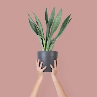 Mão de uma mulher segurando um vaso de planta