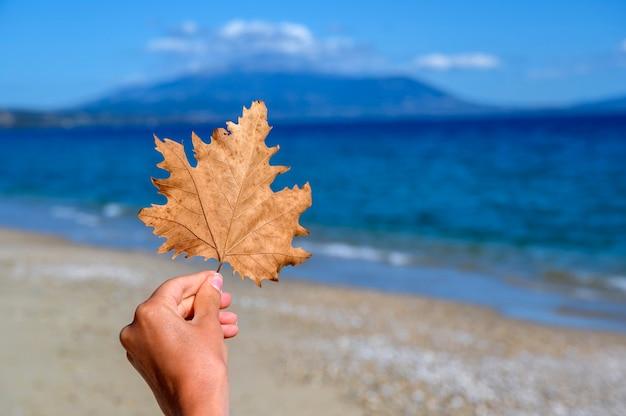 Mão de uma mulher segurando uma folha de laranja na praia em asprovalta, grécia