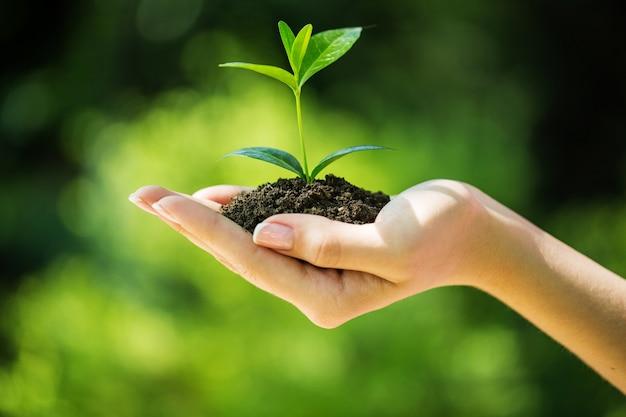 Mão de uma mulher segurando uma planta verde