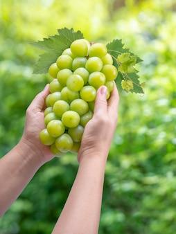 Mão de uma mulher segurando uva verde ou shine muscat grape blur espaço,