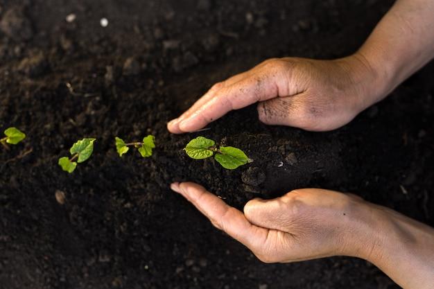 Mão de uma pessoa que está plantando mudas verdes. a planta protege a natureza e o conceito do dia da terra.