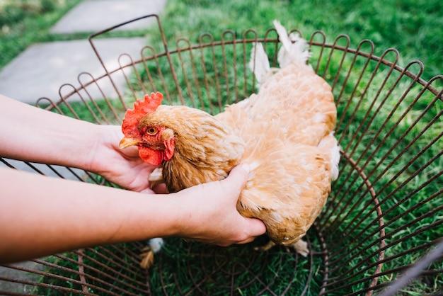 Mão de uma pessoa segurando galinha na gaiola metálica