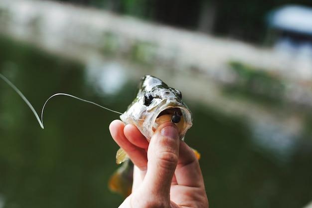 Mão de uma pessoa segurando peixe com gancho na frente do lago desfocado