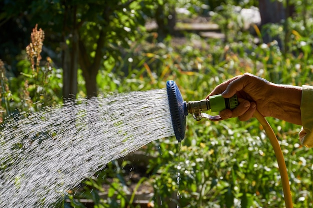 Mão de uma senhora idosa com irrigador regando o jardim