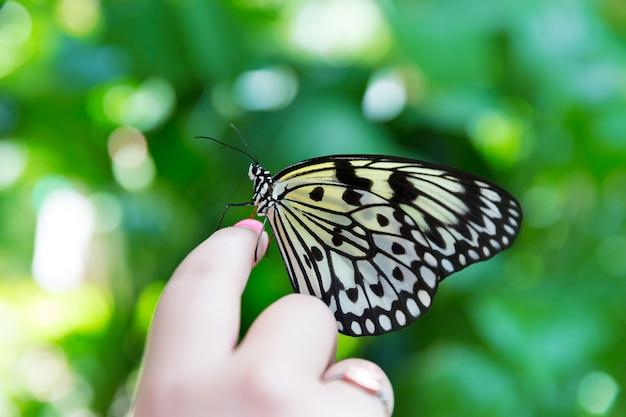 Mão dedo arroz papel borboleta idéia leuconoe