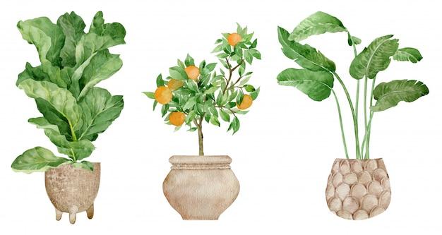 Mão desenhada plantas tropicais. decoração de casa moderna e elegante. aquarela design interior em vasos de flores.