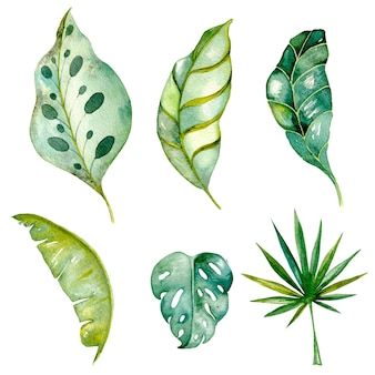Mão desenhada tropical deixa aquarela isolada no branco conjunto de folhas exóticas de samambaia de palmeira verde monstera