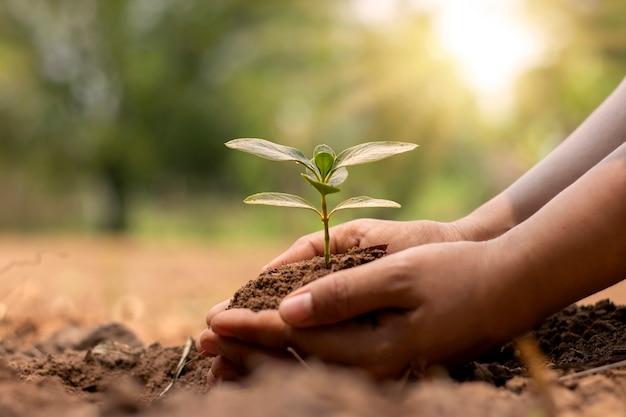 Mão do agricultor plantio de mudas no conceito de solo, florestamento e remediação ambiental.
