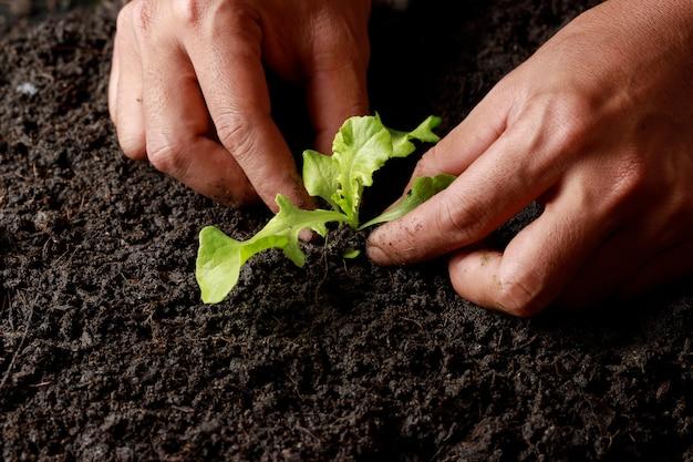 Mão do fazendeiro que planta o broto no solo fértil.