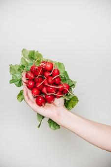 Mão do fazendeiro segurando rabanetes
