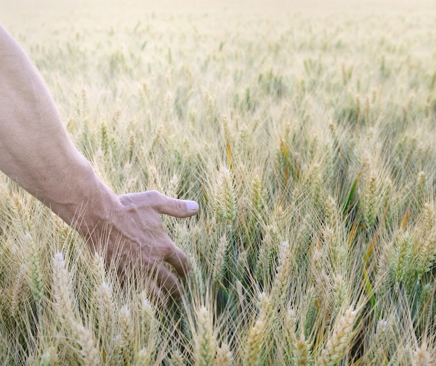 Mão do homem no campo