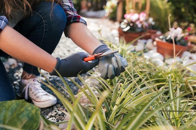 Mão do jardineiro feminino cortando a planta com tesouras de podar