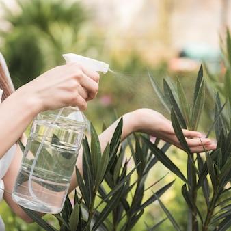 Mão do jardineiro feminino pulverizando água na planta de garrafa de plástico