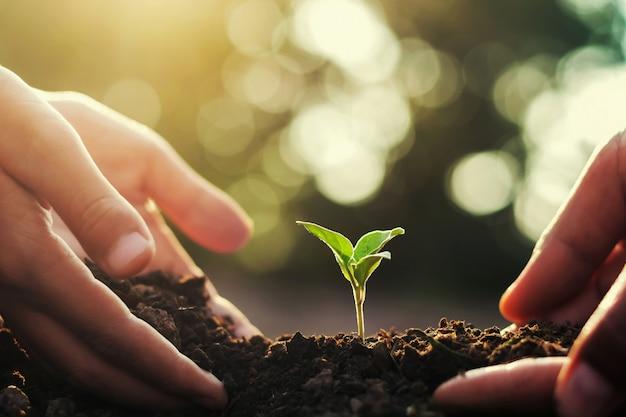 Mão dois que ajuda para plantar a árvore pequena e o nascer do sol no jardim. conceito mundo verde
