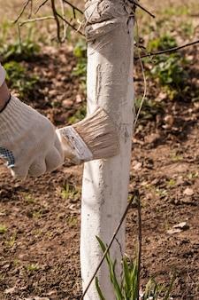 Mão dos homens com escova, cal de primavera de árvores do jardim.