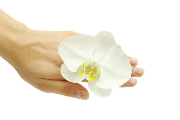 Mão e orquídea isoladas