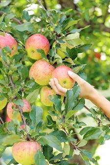 Mão e uma maçã