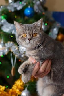 Mão entregando gato bonito sob a árvore de natal na sala festiva.