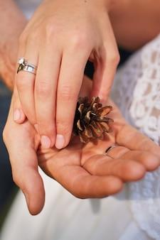 Mão fêmea que guarda o cone do pinho na natureza o mais forrest verde.