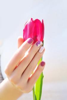 Mão feminina com design de unhas roxas segurando linda tulipa rosa.