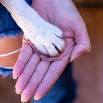 Mão feminina e pata de cachorro. um cachorro é amigo do homem. família é a coisa mais valiosa da vida. foto de familia. felicidade.