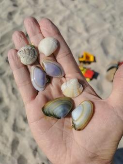 Mão feminina segura muitas conchas diferentes na palma da mão, encontradas na areia da praia