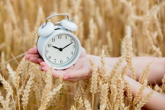 Mão feminina segurando despertador vintage no campo de trigo