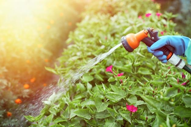 Mão feminina segurando o bico do pulverizador da mangueira e regando o jardim. irrigação para plantas no quintal