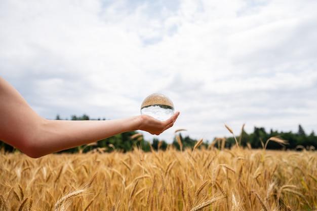 Mão feminina segurando uma bola de cristal acima de um campo de trigo dourado que amadurece no verão e reflete na esfera