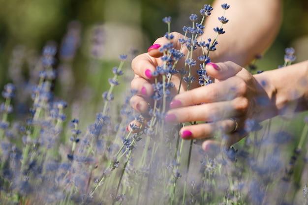 Mão feminina tocando ramo de flores de lavanda
