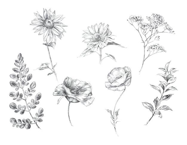 Mão gráfica boho flores pintadas isoladas. projeto de flores rústicas vintage.
