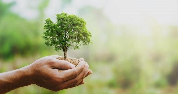 Mão holdig grande árvore crescendo em verde