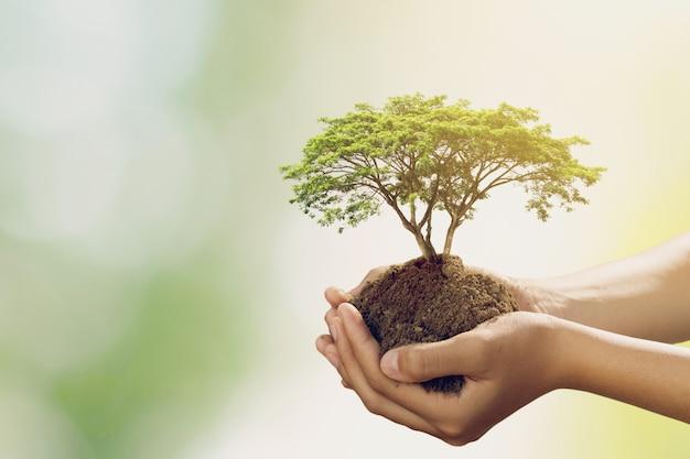 Mão holdig grande árvore crescendo sobre fundo verde