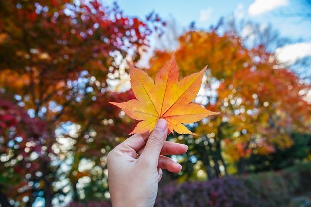Mão humana que mantém as folhas de bordo vermelhas do outono na perspectiva de um céu azul.