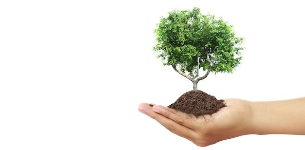Mão humana segurando broto de planta