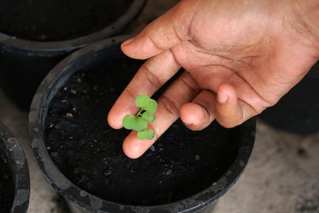 Mão humana toca uma pequena planta em um vaso de plantio