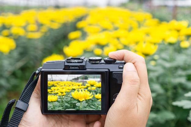Mão, levando, foto, de, bonito, flores, com, mirrorless, câmera digital, em, crisântemo, flor, fazenda
