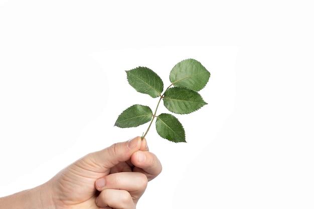 Mão masculina com folha verde