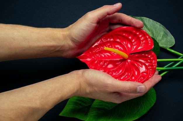 Mão masculina turva toca uma flor tropical vermelha em um preto