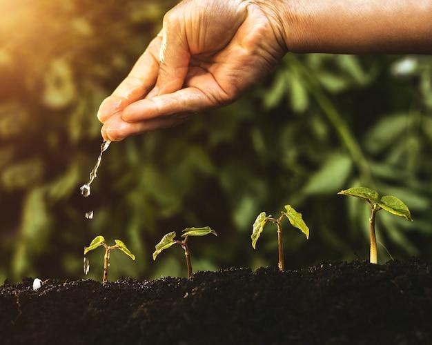 Mão molhando plantas verdes em formas crescentes, conceito para o sucesso crescente, ecologia e salvar a terra.