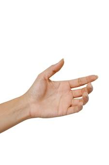 Mão, mulher, segurando, algo