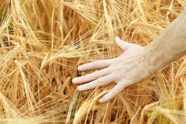 Mão no campo de trigo